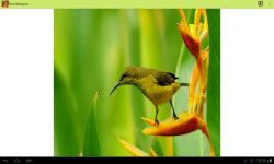 Birds Wallpapers by lalandapps screenshot 2/3