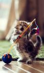 Dancer Cat Live Wallpaper screenshot 1/4