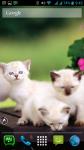 Free Cat Wallpaper For Phone screenshot 6/6