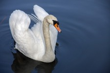Beautiful Swan Wallpaper  screenshot 6/6
