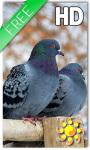 Birds Winter Live Wallpaper screenshot 1/2