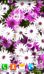 Free Flowers Live Wallpapers screenshot 2/6