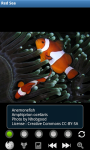 Zoo : Red Sea Wild Animals screenshot 2/6