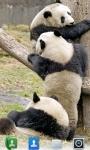 Adorable Pandas  Live Wallpaper screenshot 2/3