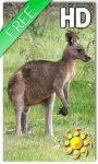 Kangaroo Australia LWP screenshot 1/2