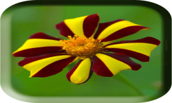 Flower photo wallpaper screenshot 1/4