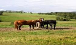 Horses Lwp2 screenshot 2/3