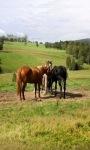 Horses Lwp2 screenshot 3/3
