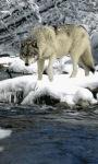 Wolf On Ice Live Wallpaper screenshot 2/3