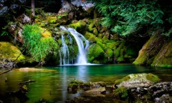 Amazing Lake Forest Pictures HD Wallpaper screenshot 6/6