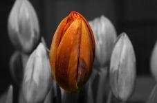 Beauty Tulip Flower Wallpaper screenshot 4/6