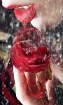 Red Rose Lip Live Wallpaper screenshot 1/3