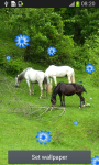 Horse Live Wallpapers screenshot 2/6