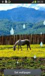Horse Live Wallpapers screenshot 3/6