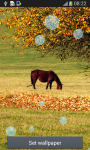 Horse Live Wallpapers screenshot 5/6