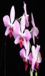 Orchid Live Wallpaper Best screenshot 3/4