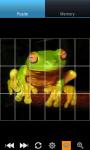Funny Frogs : Loving Animals screenshot 1/6