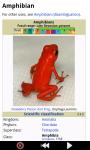 Funny Frogs : Loving Animals screenshot 3/6
