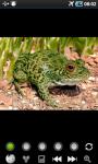 Funny Frogs : Loving Animals screenshot 4/6