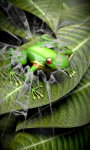 Froggy Free screenshot 1/5