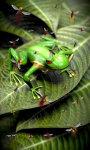 Froggy Free screenshot 2/5
