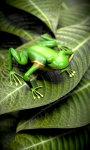 Froggy Free screenshot 3/5