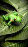 Froggy Free screenshot 4/5
