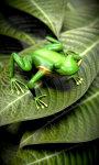 Froggy Free screenshot 5/5