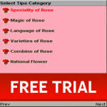 Valentines Rose_TRYBUYF screenshot 3/3