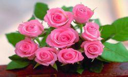 Valentines Rose Wallpapers screenshot 1/1