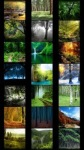 Forest Wallpapers by Nisavac Wallpapers screenshot 1/5