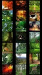 Forest Wallpapers by Nisavac Wallpapers screenshot 2/5