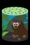 Rainforest Box screenshot 1/1