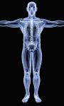 Human X Ray Scanner screenshot 6/6