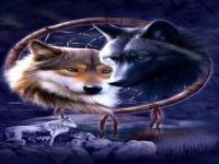Indian Wolves Live Wallpaper screenshot 1/6