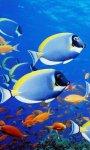 Beautiful Under The Sea Live Wallpaper screenshot 3/6