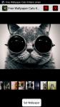 Free Wallpaper Cats Kittens screenshot 1/4