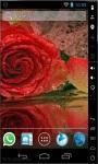 Shiny Red Rose LWP screenshot 1/2