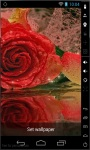 Shiny Red Rose LWP screenshot 2/2