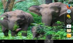 Wild Nature Live screenshot 1/6