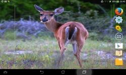 Wild Nature Live screenshot 6/6