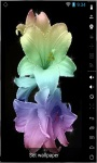 Gorgeous Colorful Lily Live Wallpaper screenshot 2/2