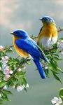 Birds Watching Live wallpaper screenshot 2/3