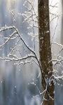 Snowy Tree Live Wallpaper screenshot 3/3
