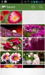 Flowers Wallpaper 2015 screenshot 4/4