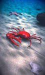 Beach Crab Free screenshot 5/5