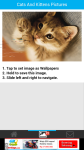 Cats And Kittens Pictures screenshot 3/6