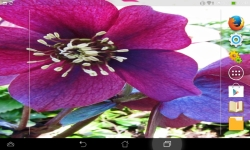 Awesome Flowers Live screenshot 1/6