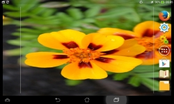 Awesome Flowers Live screenshot 5/6