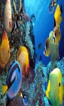 Aquarium Live Wallpaper Frames screenshot 3/5